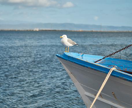 gabbiano su barca con mare